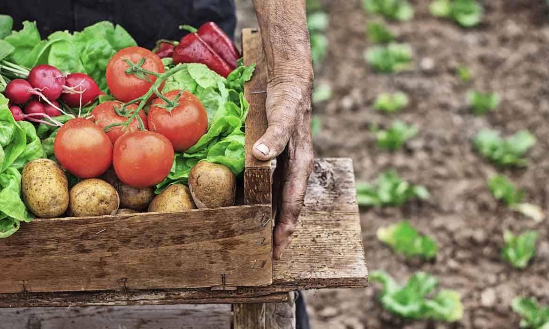 quand planter des legumes dans son potager